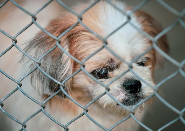 ケージに閉じ込められた放棄された犬 Premium写真