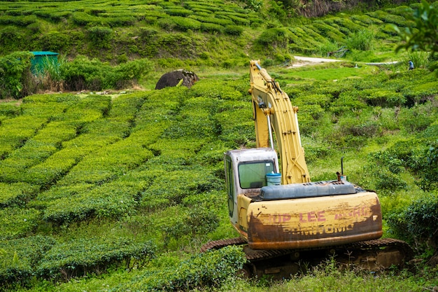 An abandoned excavator in the middle of a tea plantation. heavy construction machinery tractor in green tea fields, pure nature. Premium Photo