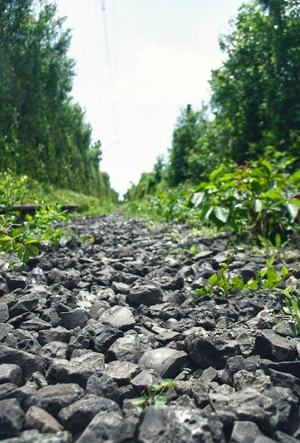 背の高い密集した緑の木々の間の廃線線路線路上の小さな黒い石 Premium写真