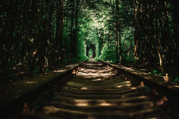Abandoned railway in a green forest Premium Photo