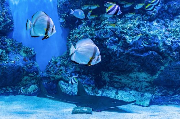 About sea fish and fresh water fish in aquarium Premium Photo