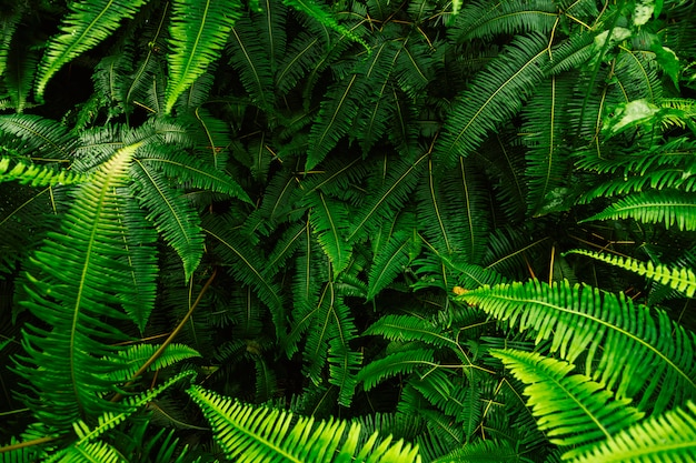 Abstract background of fern leaves. Premium Photo