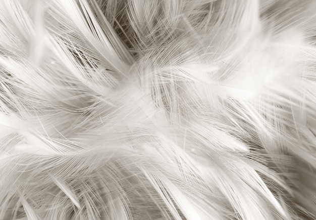 Abstract background. grey feather texture background ...Feather Background Twitter