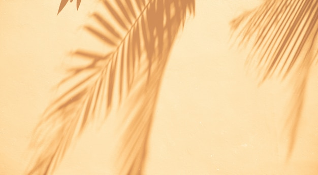 Abstract background of shadows palm leaves on a white wall. Free Photo