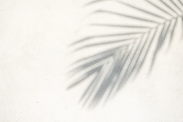 Abstract background texture of shadows palm leaves on a concrete wall Premium Photo