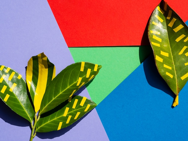 Abstract background with layers and green leaves Free Photo
