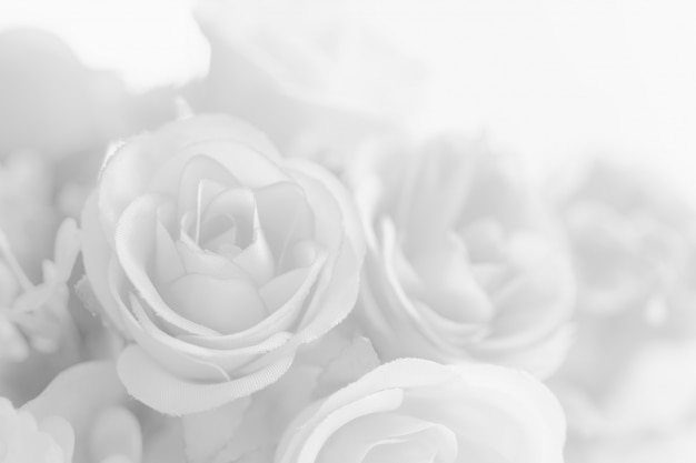 Abstract beautiful white tone rose flower Premium Photo