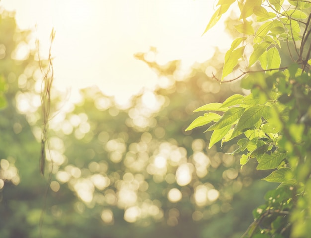 Abstract bokeh blur green color for background Premium Photo