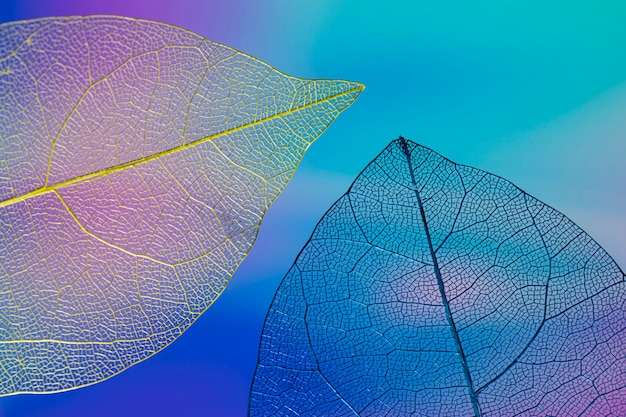 Abstract colorful autumn leaves Free Photo