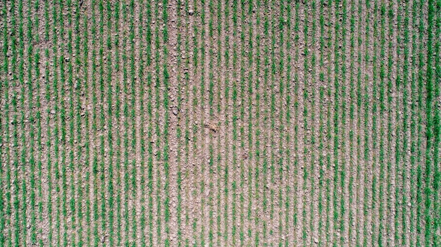 Abstract geometric shapes of agricultural parcels of different crops in yellow and green colors. aerial view shoot from drone directly above field Premium Photo