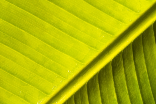 Abstract green banana natural leaf Free Photo