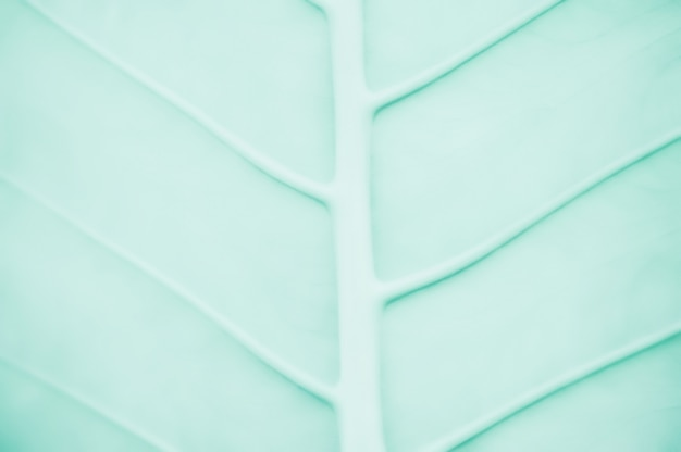 Abstract  green leaf texture background for design Premium Photo