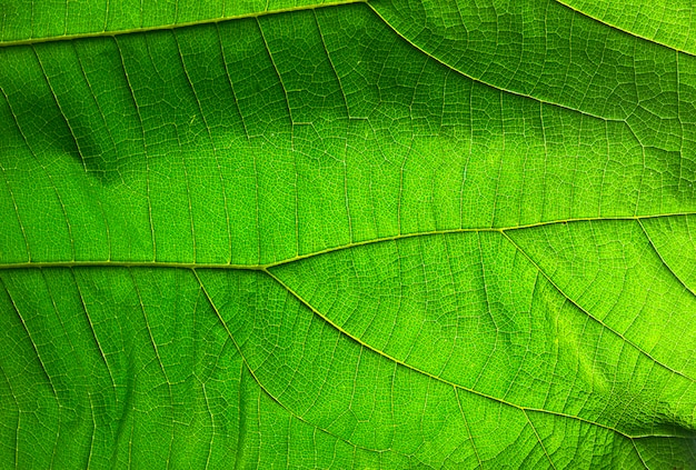 Abstract green leaf texture for background Premium Photo