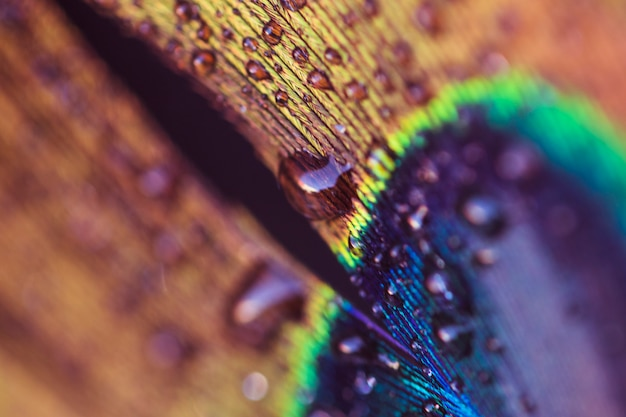 An abstract image of a peacock feather with a water drop Free Photo