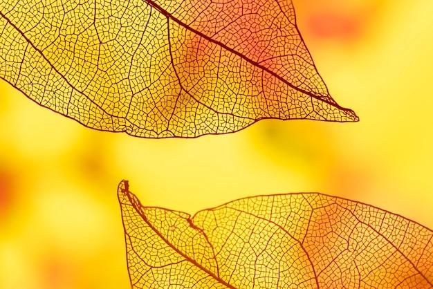 オレンジと黄色の抽象的な葉 無料写真