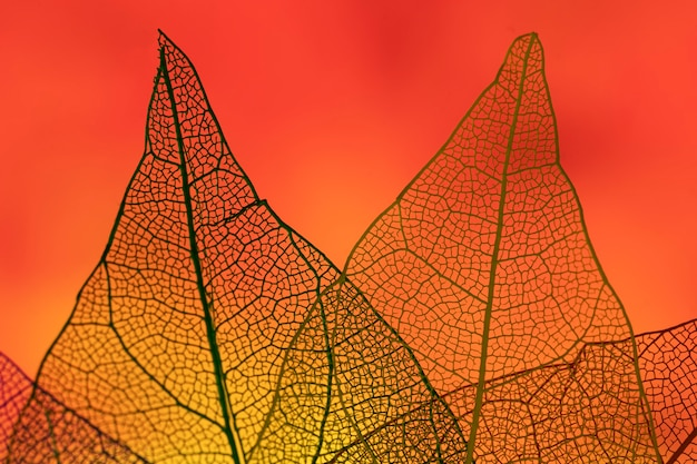 Abstract leaves with red backlight Free Photo