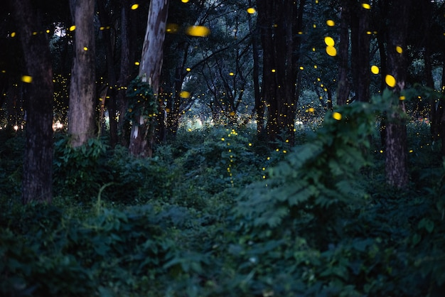 Abstract and magical image of firefly flying in the night forest Premium Photo