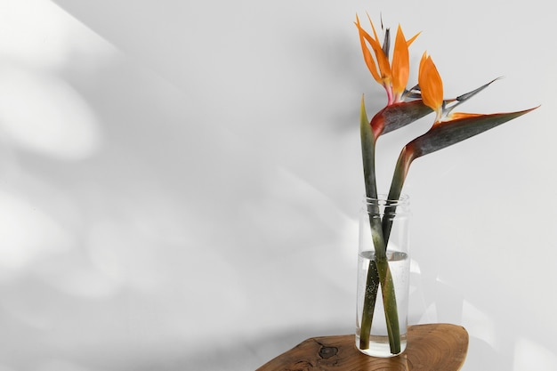 Abstract minimal concept flower with shadows in a vase Free Photo