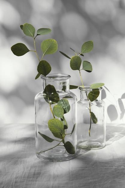 추상 최소한의 개념 나뭇잎과 그림자 프리미엄 사진