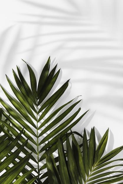 추상 최소한의 개념 나뭇잎과 그림자 무료 사진