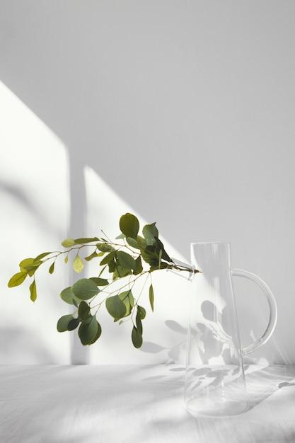 추상 최소한의 개념 식물과 그림자 무료 사진