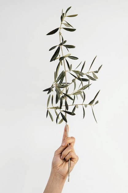 Abstract minimal plant being help in hand Free Photo