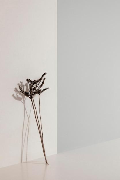 壁のコピースペースに寄りかかって抽象的な最小限の植物 無料写真