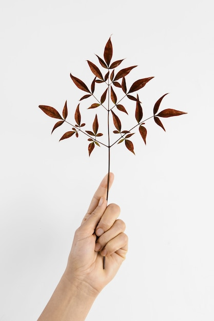 Abstract minimal plant with red leaves being help in hand Free Photo