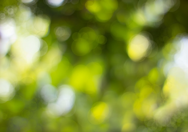 Abstract natural green bokeh, green bokeh from tree Premium Photo