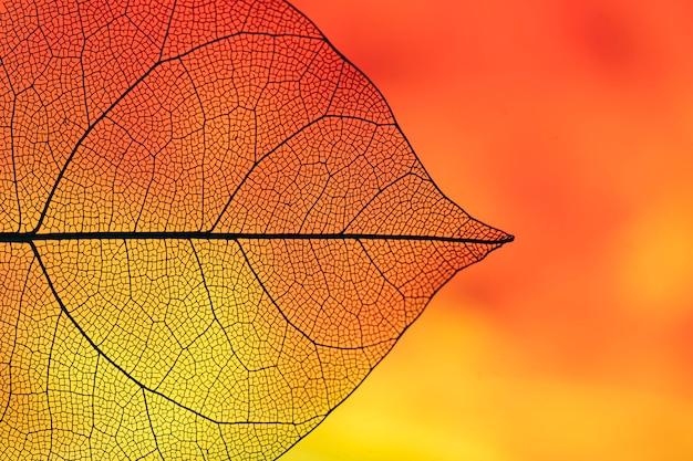Abstract orange colored fall foliage Free Photo