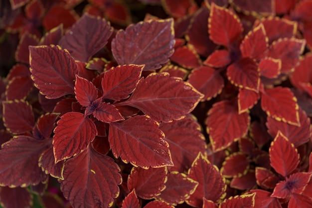 自然の中で抽象的な赤い植物の葉 無料写真