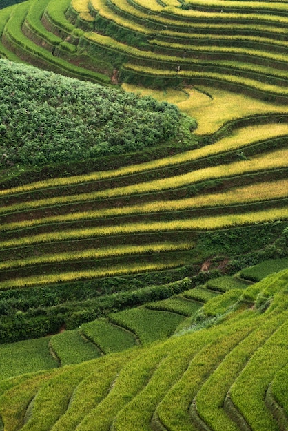 Abstract rice fields on terraced of mu cang chai vietnam Premium Photo