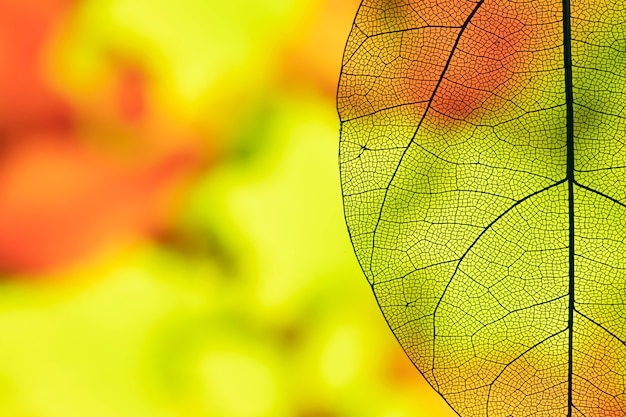 Abstract transparent autumn leaf Free Photo