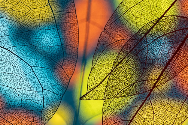 Abstract transparent colored leaves Free Photo