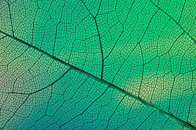 緑の抽象的な透明な葉脈 Premium写真