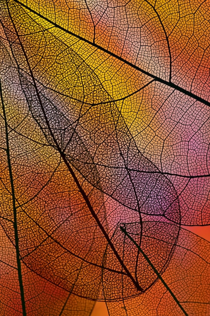 Abstract transparent leaves with red backlight Free Photo