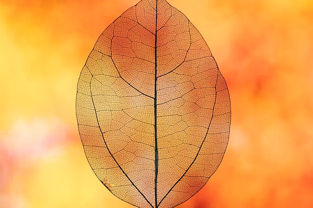 Abstract transparent orange fall leaf Free Photo