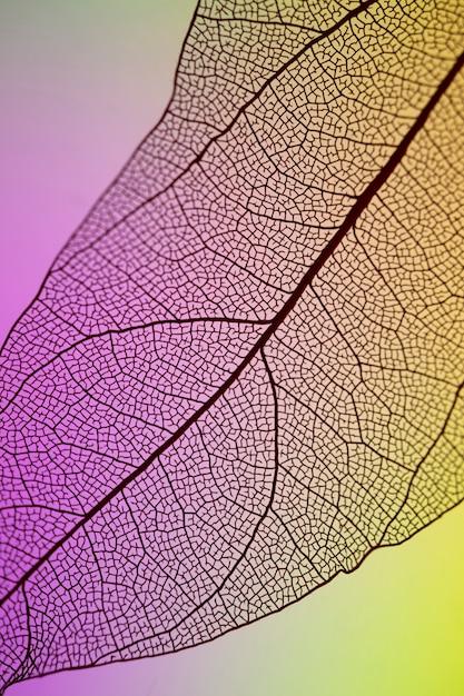 抽象的な透明な紫と黄色の葉 無料写真