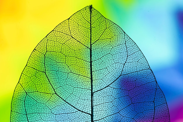 Abstract transparent vivid fall leaf Free Photo