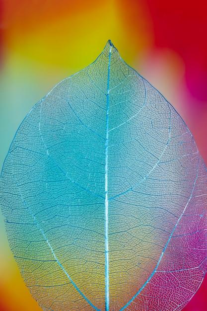 Abstract vivid colored autumn leaf Free Photo