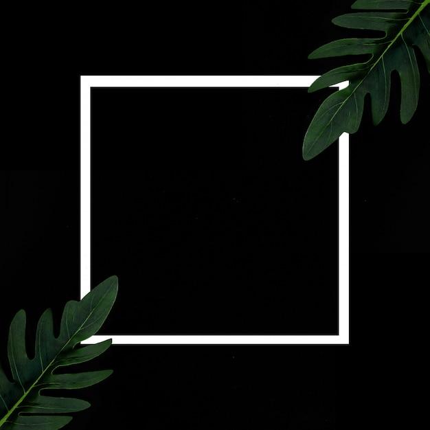 熱帯植物と黒の背景上の白いフレーム(abstrct mal escrito en esta y otra tarea) 無料写真