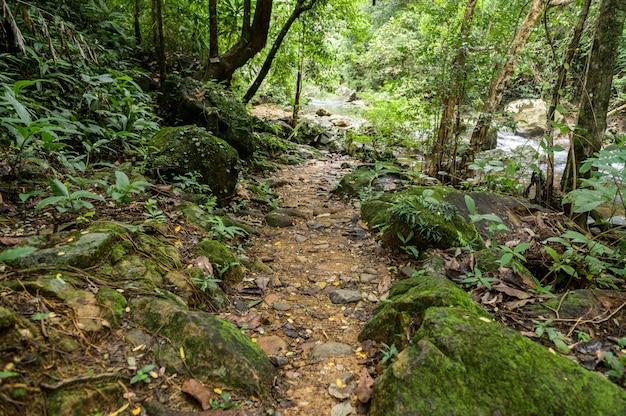 Abundant forest in thailand Free Photo
