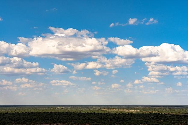 Acacia tree with blue sky background in etosha national park, namibia. south africa Free Photo