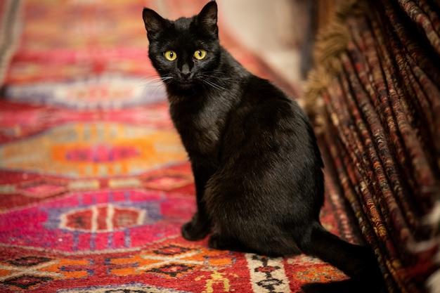 Adorable black cat on the carpet Premium Photo