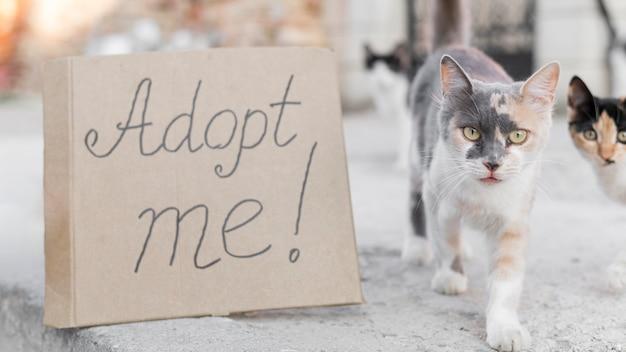 屋外で愛らしい猫は私に署名を採用 無料写真