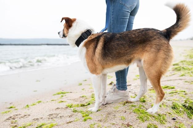 Cane adorabile che gode della passeggiata nella natura Foto Gratuite
