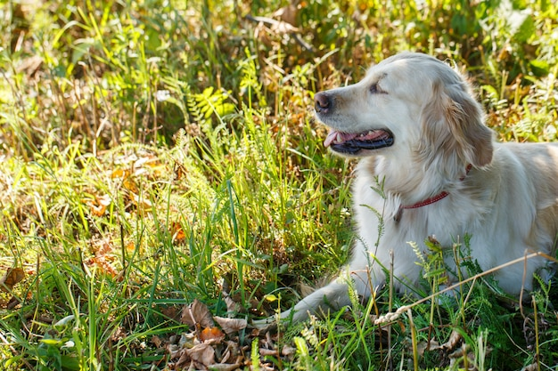 Adorable dog in the grass Free Photo
