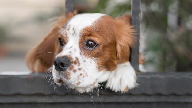 Adorabile cane che attacca la testa attraverso il recinto all'aperto Foto Gratuite