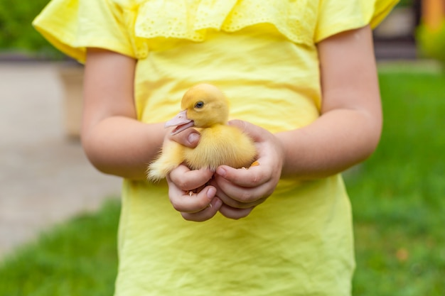 Adorable girl holding a little yellow duckling in her hand. Premium Photo