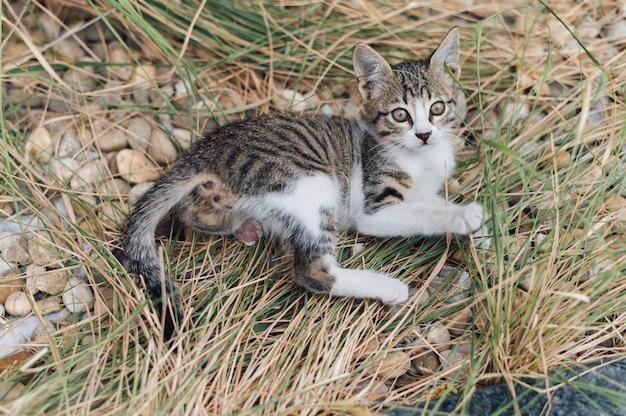 屋外で遊ぶ愛らしい小さな猫 Premium写真